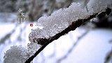 中国小寒时节的气候有哪些特点?