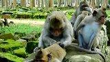 一个大猴子都怀孕了还这么爱打扮
