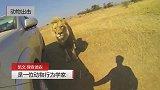凯文·理查德森和狮子近距离接触