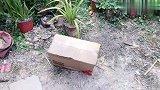 妹子从网上购买兰花盆,发现带回来的花盆太小与兰花不搭配!