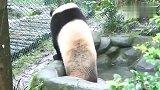 熊猫:水不会凉,我觉得ok