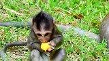 新猴王利用一切机会立威
