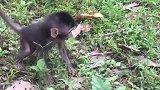 令人难以置信的新怀孕猴子,开始有有趣的婴儿