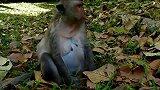 找个地方生孩子,怀孕的猴妈最辛苦