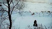 公益-央视春节公益广告片《回家》整合版