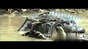 聚力守护-20140103-动物大战蟒蛇大战鳄鱼
